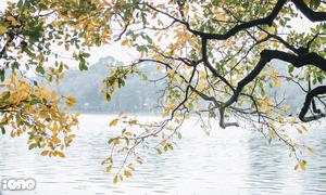Hà Nội mùa cây thay lá - đẹp như một bức tranh