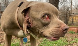 Chú chó 'độc nhất vô nhị' có miệng mọc ở tai