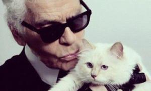 Cuộc sống xa hoa của 'cô' mèo Karl Lagerfeld từng muốn cưới làm vợ