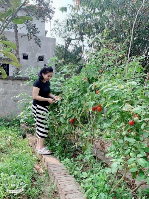 Vườn rau sạch với những loại cây được tự tay bà xã Hồng Đăng chăm bón.
