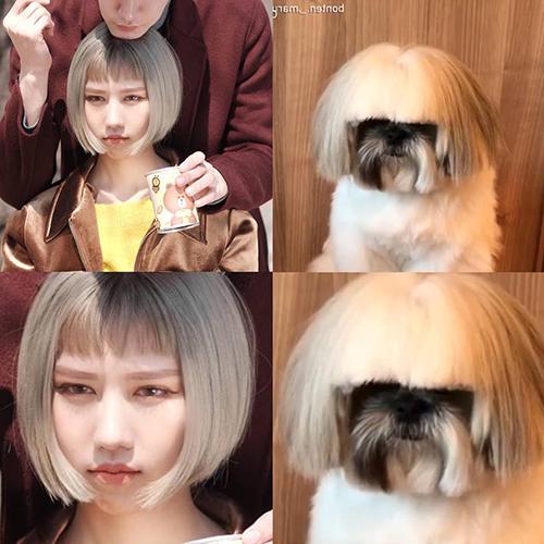 Min tự so sánh mái tóc của mình với... chú cún.