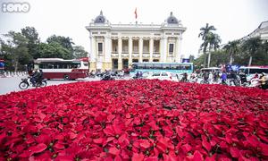 Hoa tươi trang hoàng đường phố Hà Nội đón Hội nghị thượng đỉnh Mỹ - Triều