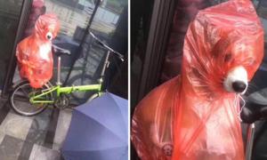 Bức ảnh chứng minh 'mưa thế nào boss cũng đi chơi được, miễn là sen có tâm'