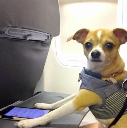 Cuộc sống đáng mơ ước của chú chó thoát khỏi 'án tử hình' trong chuồng thú - 3