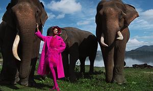 H'Hen Niê đầy thần thái khi chụp hình giữa đàn voi