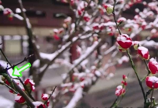 Dù cảnh cây hoa này chỉ lướt qua rất nhanh, mắt cú vọ của khán giả vẫn tóm được chi tiết đoàn phim dùng dây thép cố định cành hoa giả vào cành cây.