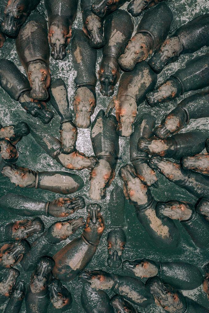 <p> <strong>Những tác phẩm khác được vinh danh tại giải thưởngSkyPixel 2019:</strong></p> <p> <strong>Hạng mục Nhiên nhiên (Nature):</strong><br /> Giải nhất: Tác phẩm <em>Hungry Hippos</em> (Đàn hà mã đói), tác giả Martin Sanchez.</p>