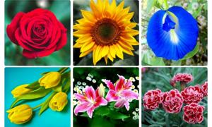 12 chòm sao là loài hoa nào?