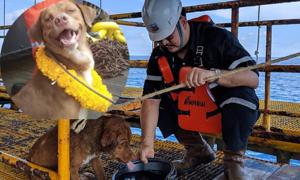 Chó trôi dạt 220 km ngoài biển được cứu sống ở Thái Lan