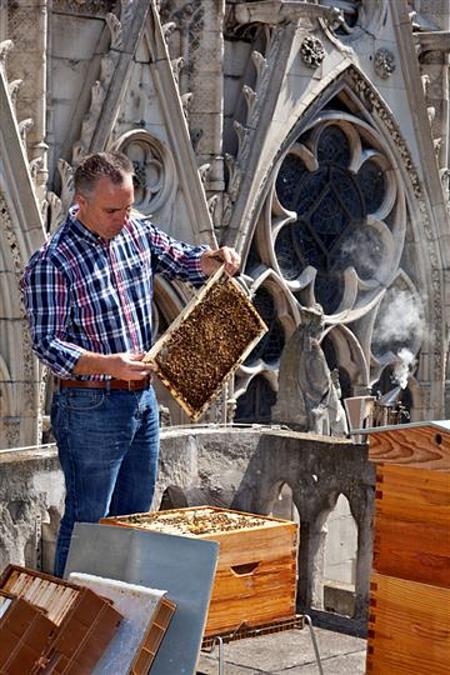 Nicolas Géant nuôi ong trên mái Nhà thờ Đức Bà Paris.