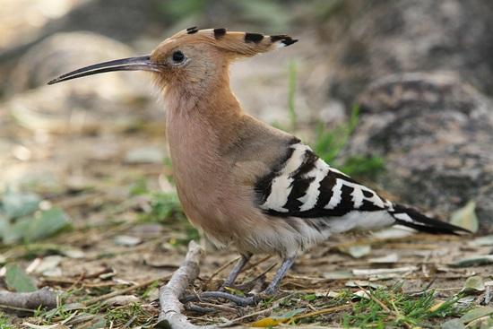 Tên những con chim sặc sỡ này là gì? - 1