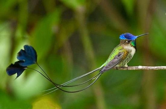 Tên những con chim sặc sỡ này là gì? - 3