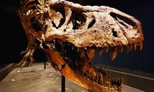 Người đàn ông rao bán hóa thạch khủng long giá 2,95 triệu USD