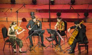 Nhóm 'tứ tấu đàn dây' nổi tiếng nước Mỹ 'phiêu' cùng khán giả Việt