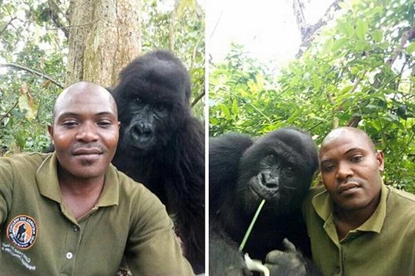 Những con khỉ thoải mái chụp ảnh tự sướng với kiểm lâm.