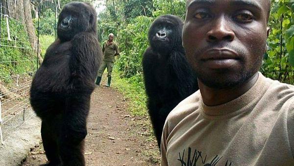 Kiểm lâm viên pose hình cùng hai chú khỉ đột gây bão mạng xã hội.