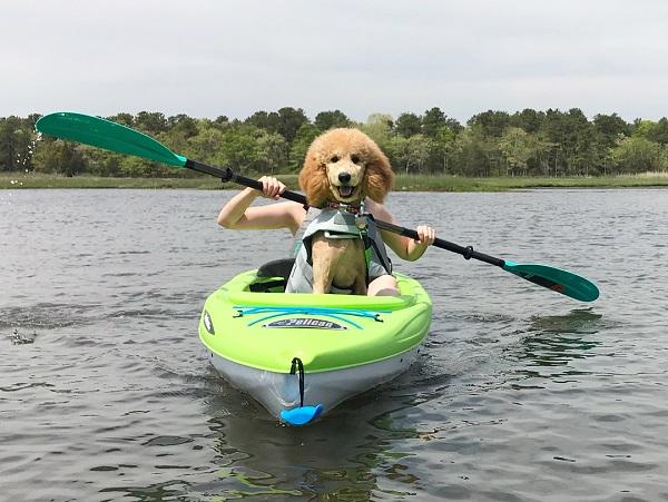 Ai bảo cún con thì không thể chèo thuyền???