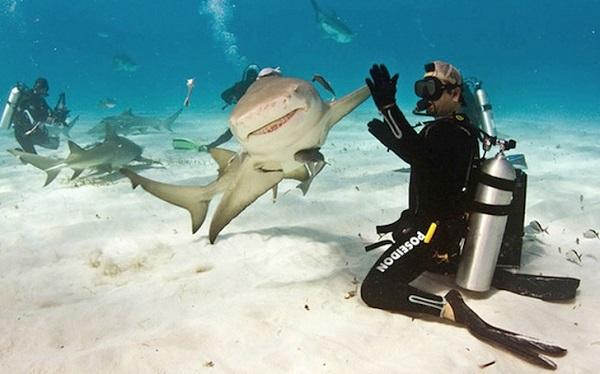 Cú đập tay đầy hào hứng giữa người thợ lặn và chú cá mập trắng.