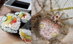 Loài 'nhện sushi' kỳ dị ở Australia
