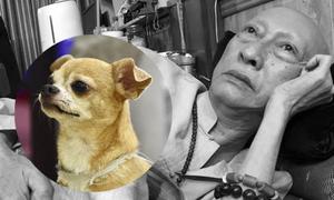 Chú cún nhỏ buộc khăn tang, quẩn quanh bên linh cữu Lê Bình