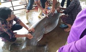 Thanh niên giả rao bán vi cá mập trên Facebook vì thích 'chém gió'