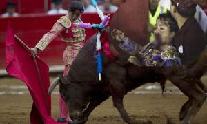 Nữ võ sĩ bị bò tót đâm thủng mắt, vỡ xương hàm