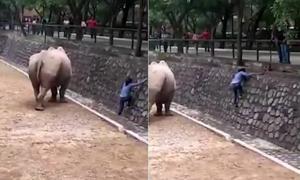 Cô gái nhảy vào chuồng tê giác lấy điện thoại khiến người thót tim