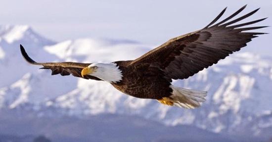 Hiểu biết từ vựng về các loài chim trong tiếng Anh - 3