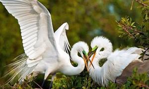 Hiểu biết từ vựng về các loài chim trong tiếng Anh