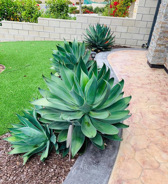 <p> Cỏ, cây xanh được Lệ Quyên trồng khắp khu vườn.</p>