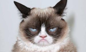 Mèo Grumpy nổi tiếng thế giới ra đi