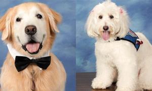 Chó đeo nơ tạo dáng chụp ảnh kỷ yếu