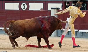 Đấu sĩ Pháp bị bò tót xé rách quần, húc thẳng vào mông