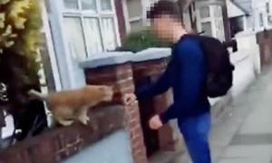 Thiếu niên 15 tuổi bị chỉ trích vì cho mèo ăn tát