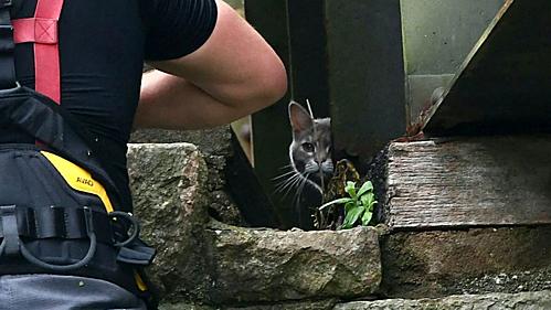 Một lính cứu hỏađang cố gắng giải cứu mèo Hatty.