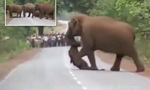 Đàn voi xếp hàng 'đưa tang' voi con