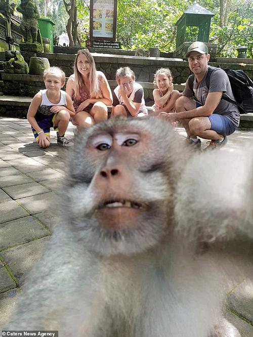 Khỉ giơ ngón tay thối chụp ảnh selfie cho người
