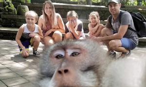 Khỉ giơ 'ngón tay thối' chụp ảnh selfie cho khách du lịch