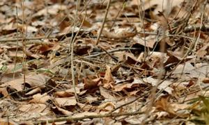 Thách bạn tìm ra con vật ngụy trang chỉ với 5 giây
