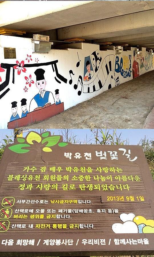 Con đường hoa anh đào Park Yoo Chun bị phá bỏ.