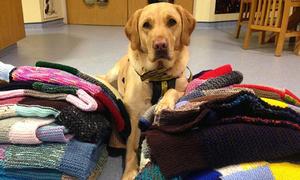 Cụ bà 89 tuổi đan 450 chiếc áo dành tặng chó