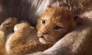 'The Lion King' phiên bản live action được giới phê bình khen ngợi