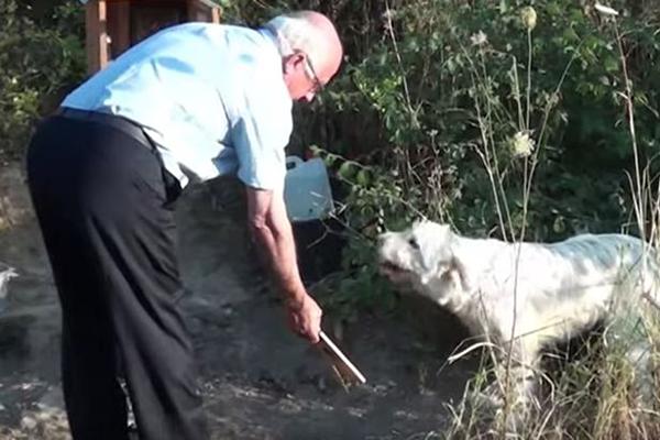 Người dân mang thức ăn, nước uống cho chó Hy Lạp.
