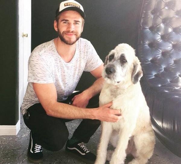 2015: Cặp đôi nối lại mối quan hệ bạn bè, thậm chí Miley còn giúp Liam chăm sóc một chú chó cưng của nam diễn viên.