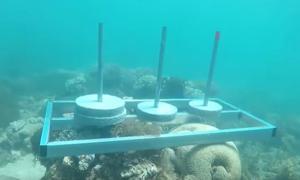 Đặt bê tông lên rạn san hô, ê-kíp 'Cuộc đua kỳ thú' bị chỉ trích