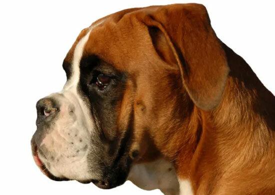 Đâu là chú cún con của giống chó này? - 40
