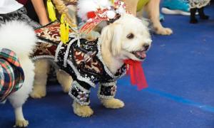 Lễ hội thú cưng Sài Gòn 2019 gây bức xúc vì cấm 'chó cỏ'