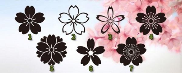 Bói hoa: Những bông anh đào hé lộ điều tuyệt vời sắp đến với chuyện tình yêu của bạn