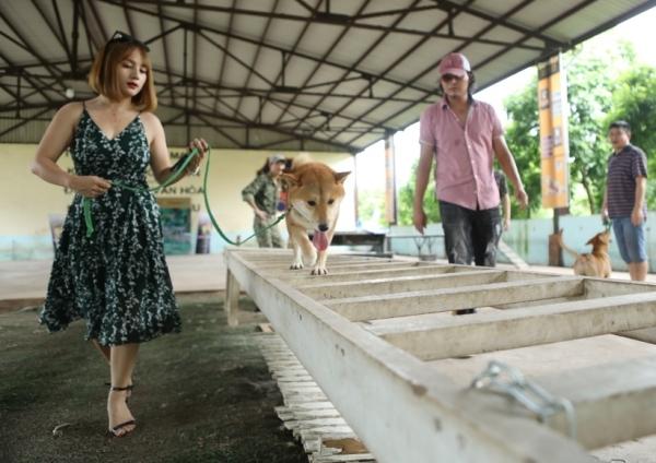Chú chó được chọn làm bé Vàng trong phim điện ảnh tham gia casting.