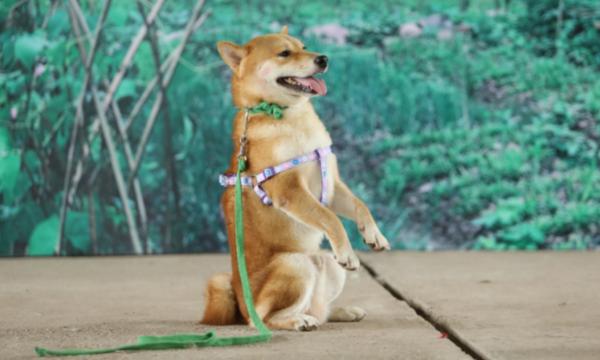 Chú chó được chọn đóng phim điện ảnh của Việt Nam.